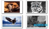 wallpaper animals | Обои с животными