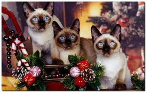 Новогодние обойки с животными| Happy new year (animals)