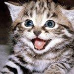 Красивые кошки на рабочий стол|Wallpapers cats